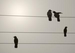 lc4-birds-72dpi